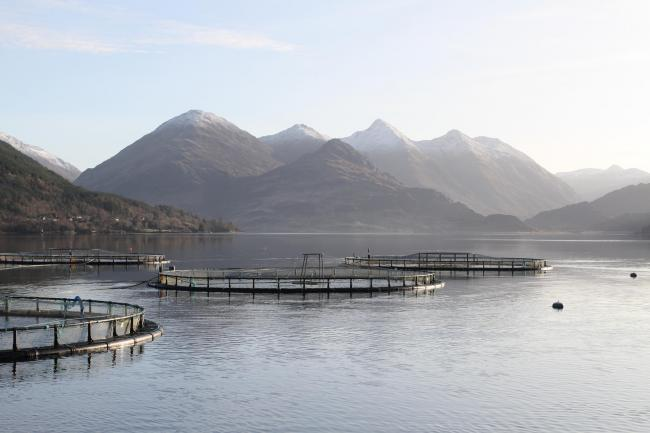 Formaldehyde, used to preserve dead animals, is permitted at 184 Scottish fish farms