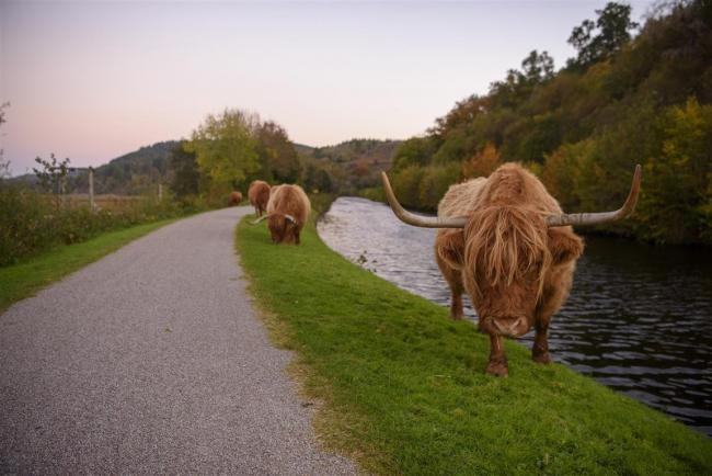 A range of wildlife can be spotted along the Caledonia Way, which stretches 237 miles
