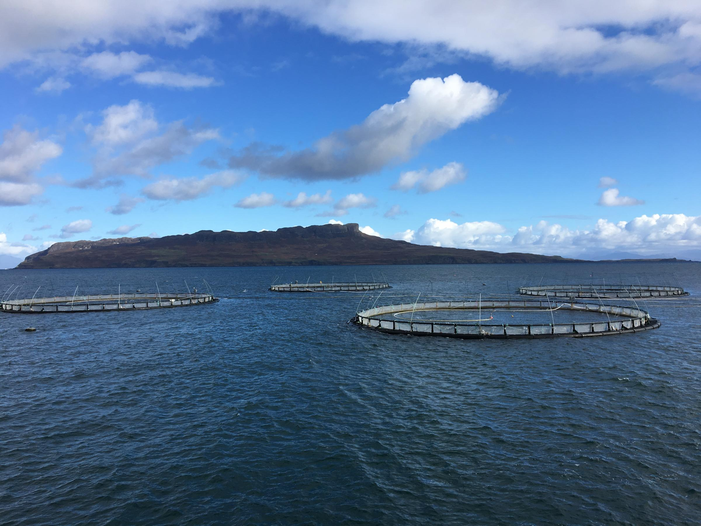 Mowi to move its Scottish salmon farms to Isles of Muck Rum