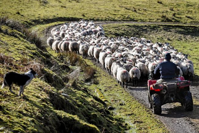 Many Scottish farmers are concerned about post-Brexit policy changes
