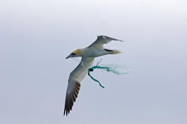 Birds are in danger from entanglement in debris