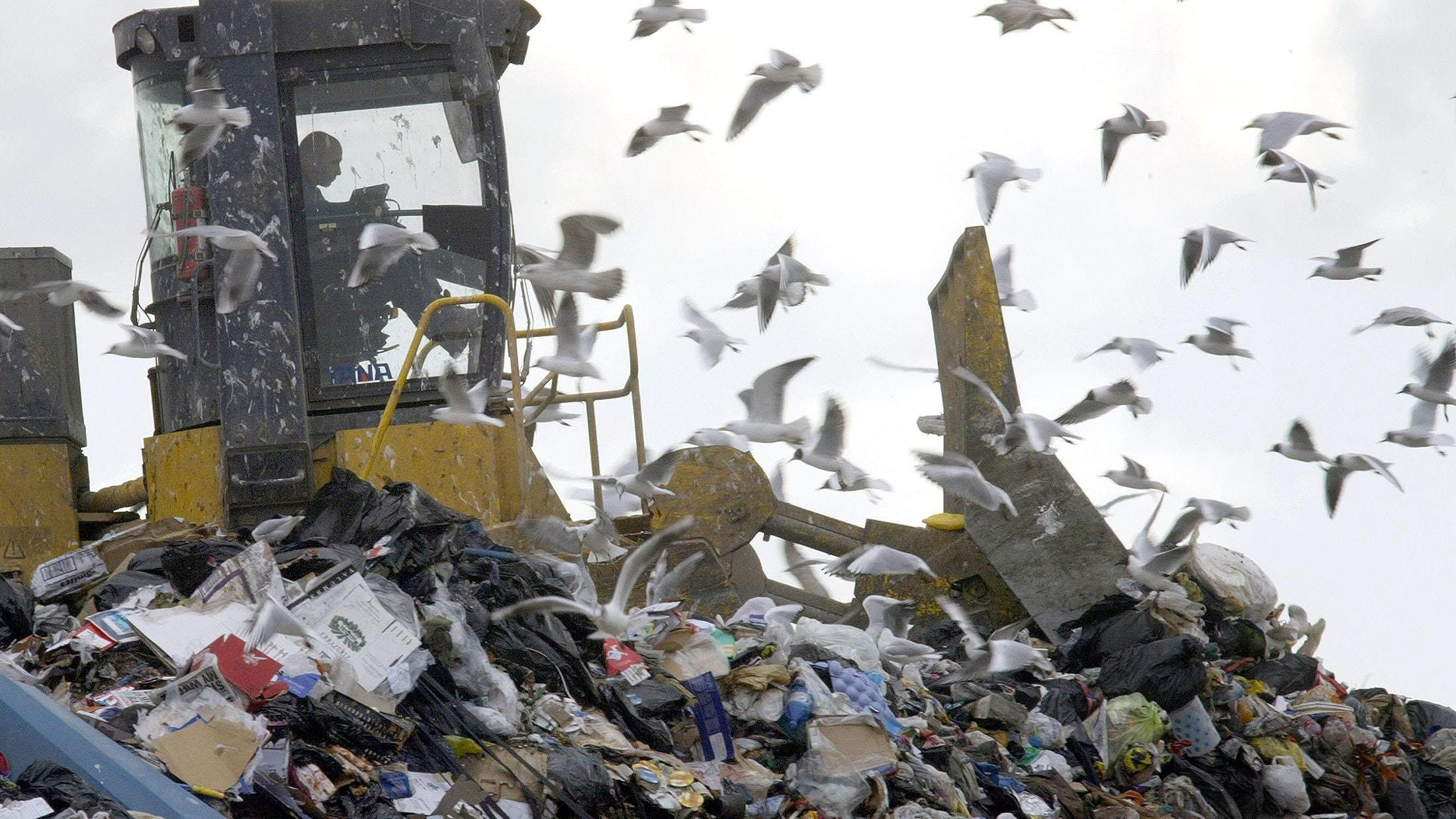 Praise for Scotland as it leads the way in food waste recycling