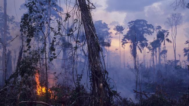 As the Amazon rainforest burns, Brazil's president Jair Bolsonaro dismissed interventions as the result of a 'misplaced colonialist mindset'