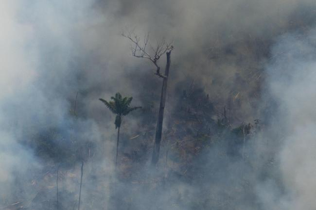 Multiple fires are burning in the Amazon, known as the 'lungs of the planet'
