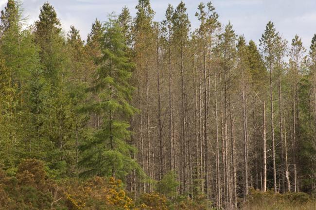 The annual planting target in Scotland of 10,000 hectares (ha) – roughly 20 million trees – was smashed, with 11,200 ha of new woodland planted
