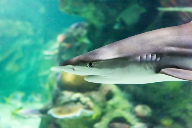 Some species of sharks were tracked in the new study