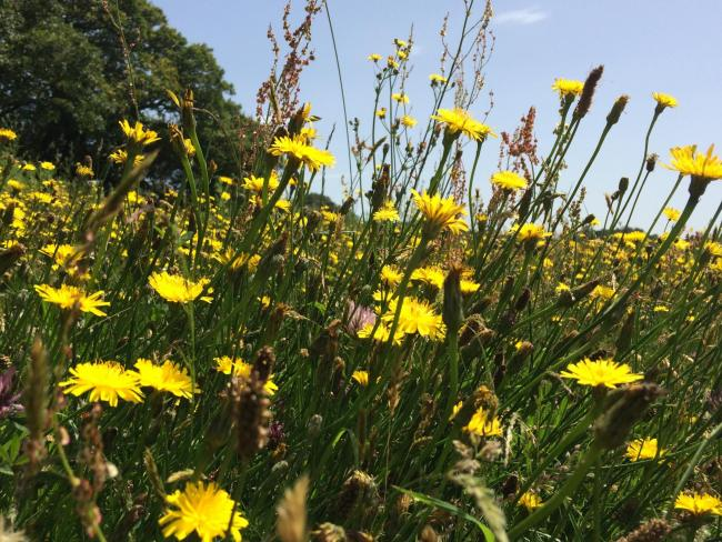 Wildflowers move north as climate changes, citizen survey shows