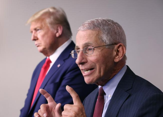 Is Dr Anthony Fauci stealing Donald Trump's thunder?