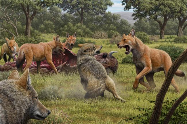 Illustrations of dire wolves feeding