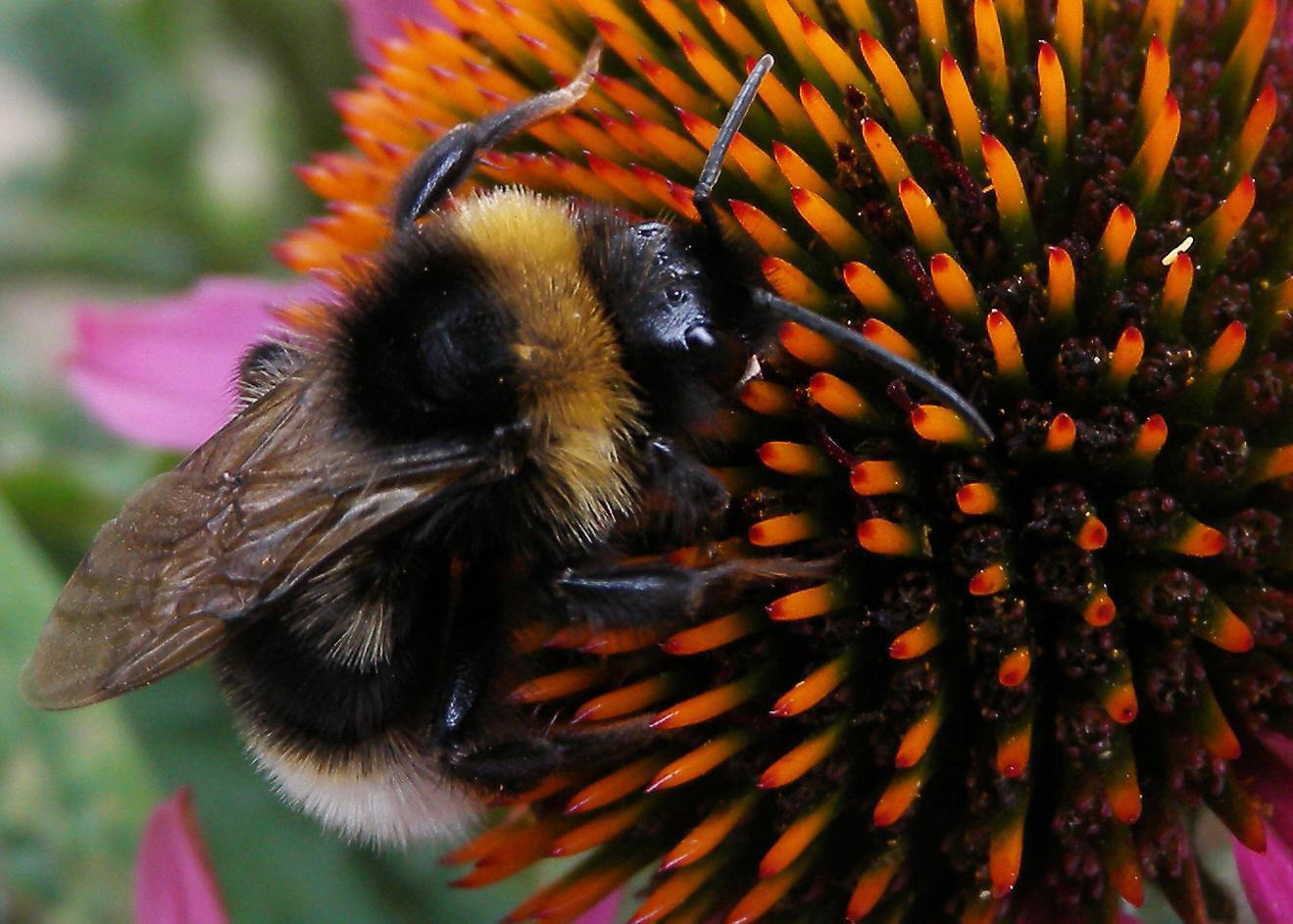Plan Bee: Scotland's concern over deadly insecticide Brexit U-turn