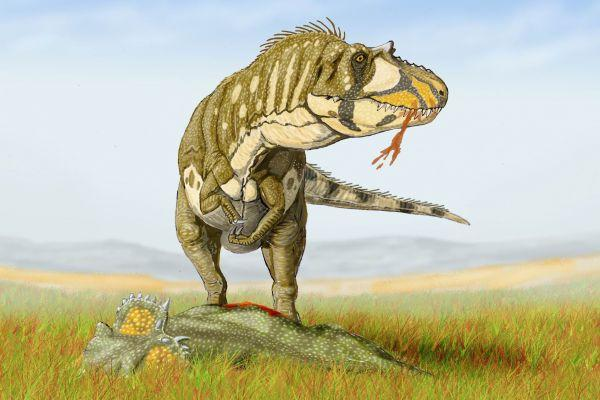 One Daspletosaurus scientists studied may have been a victim of cannibalism
