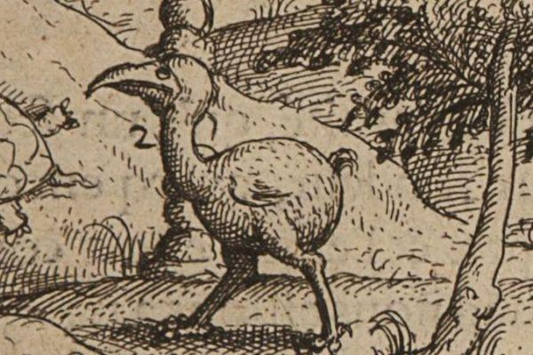 The dodo: a 'disgusting bird'?