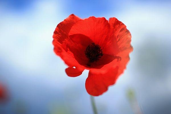 Letters To The National November 4 Are Poppies Now A Nationalist