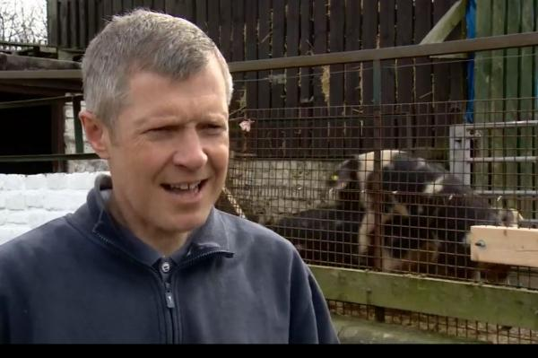 The National: Willie Rennie with an amorous pair of pigs at Gorgie City Farm