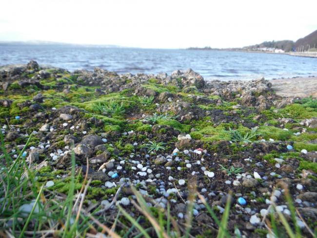 Patches of nurdles have been found scattered all over the coast of Scotland