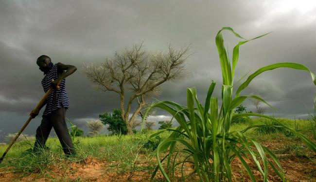 The research could help up to 100 million African farmers. Photograph: Getty