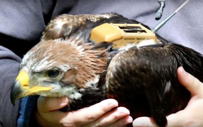 The techniques will help in investigations into tagged birds of prey that go missing
