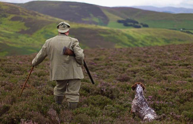Approximately 18% of Scotland's land area is used for grouse shooting