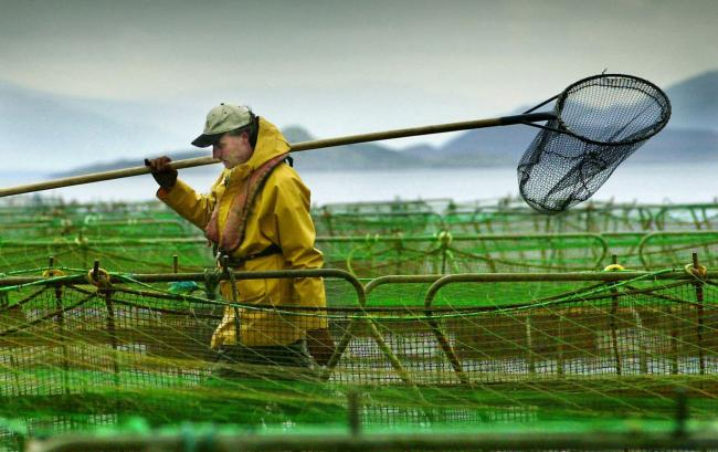 Campaigners have described Scottish salmon as a 'consumer con'