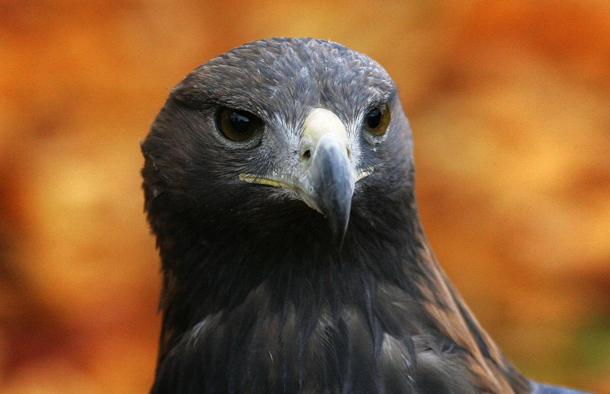 Bird of prey tracking tech to help stop Highland wildlife crime
