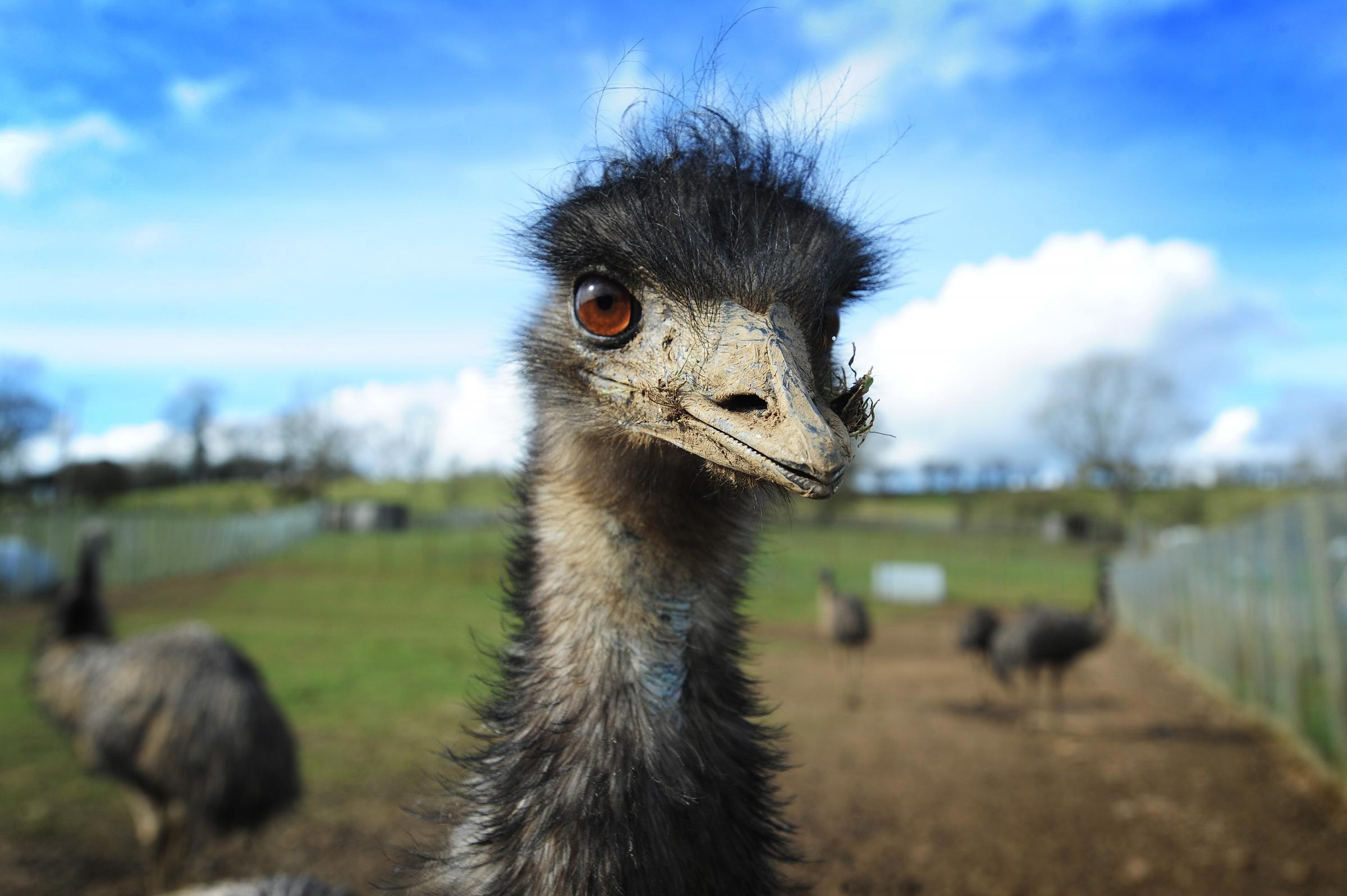 Emu escaped from Scottish care home found in woodland